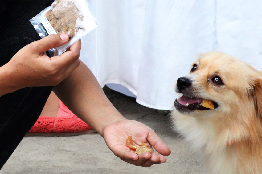Cookie for Dogs